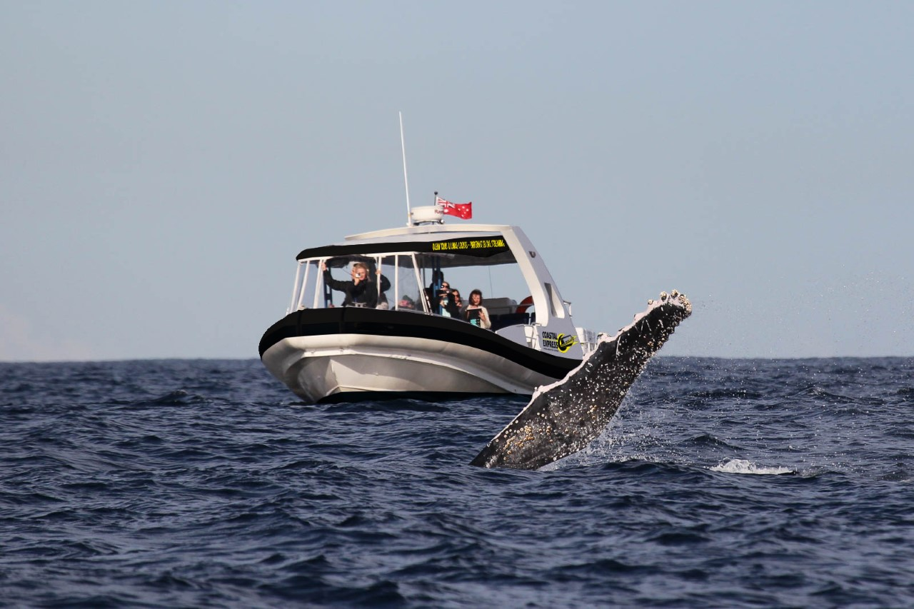 Coastal Express 2HR Mooloolaba Whale Watching Experience
