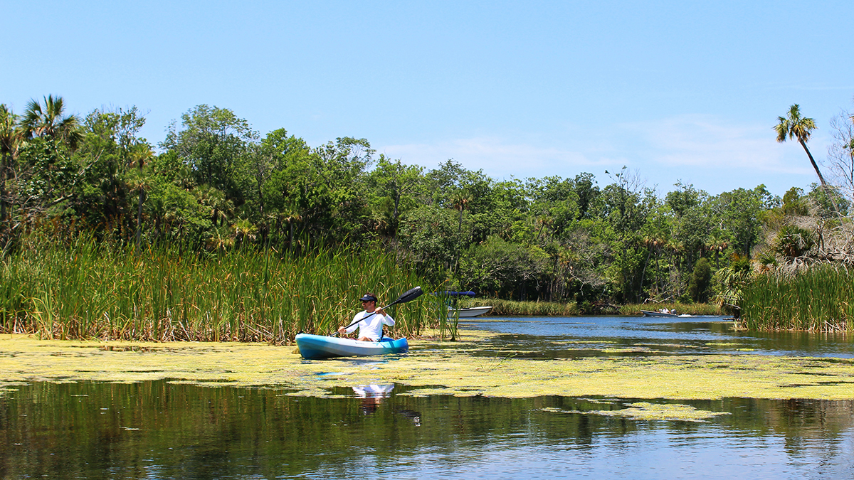 Guided Chazz Paddle - Manatee and Wildlife Paddle (5 hr)