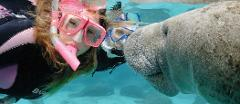 FLASH SALE!!  - Swim with the Manatees - Crystal River