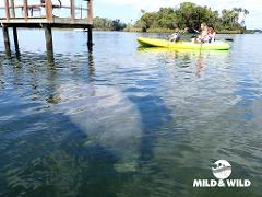 FLASH SALE!!!!! Manatee Swim & Paddle Tour - The Manatee Paddle