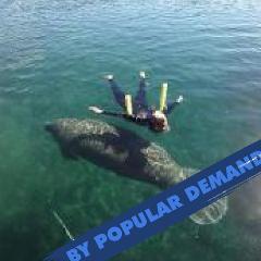 FLASH SALE!!  - Swim with the Manatees