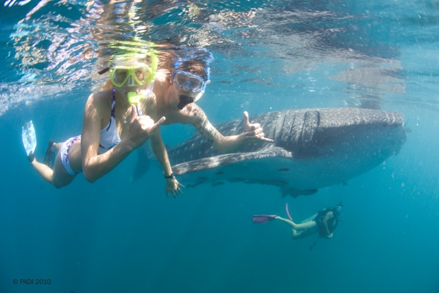 Instruct Snorkelling Course