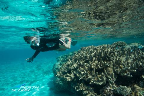Ningaloo dive snorkel sail safari perth scuba reservations - Ningaloo reef dive ...