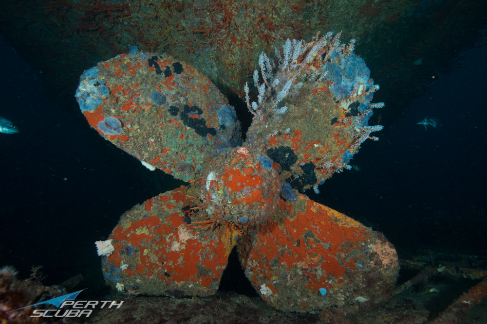 Lena Wreck Dive, Bunbury