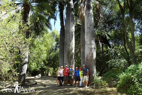"""Chilean Forest Hike 12K private - """"La Campana"""" National Park from Santiago"""