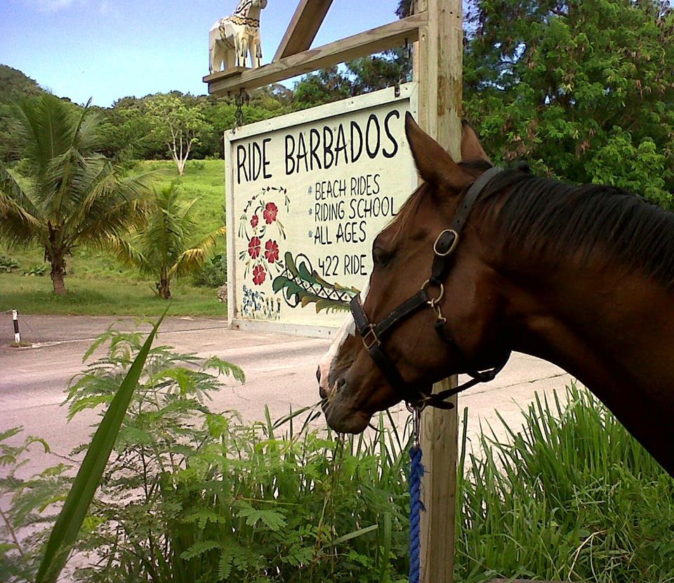 Ride Barbados