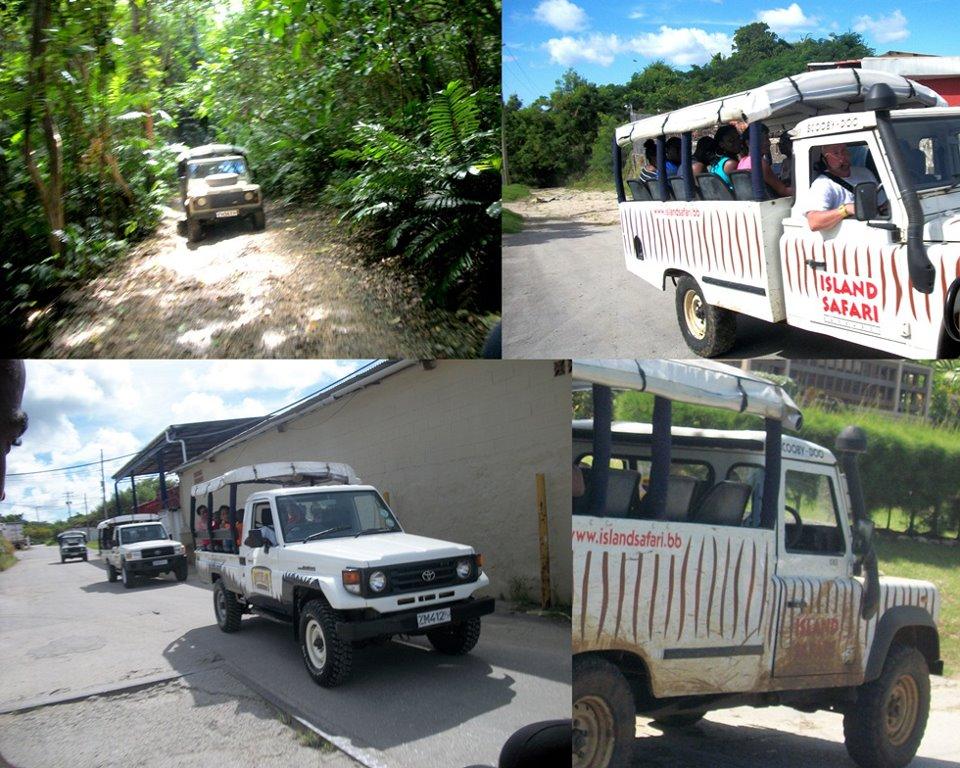 Island Safari - Discover Safari Tour - Half Day