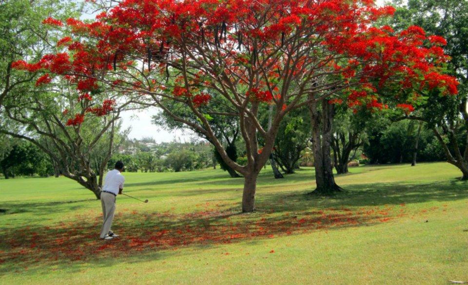 Barbados Golf Club - All Inclusive Golf Package w/transportaton