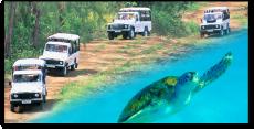 Island Safari - Land & Sea