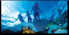 Wildcat - Snorkel & Adventure