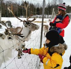 Feed the Reindeer Experience