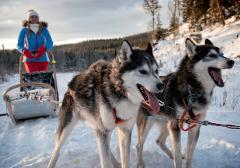 Dog Sledding with outdoor dinner