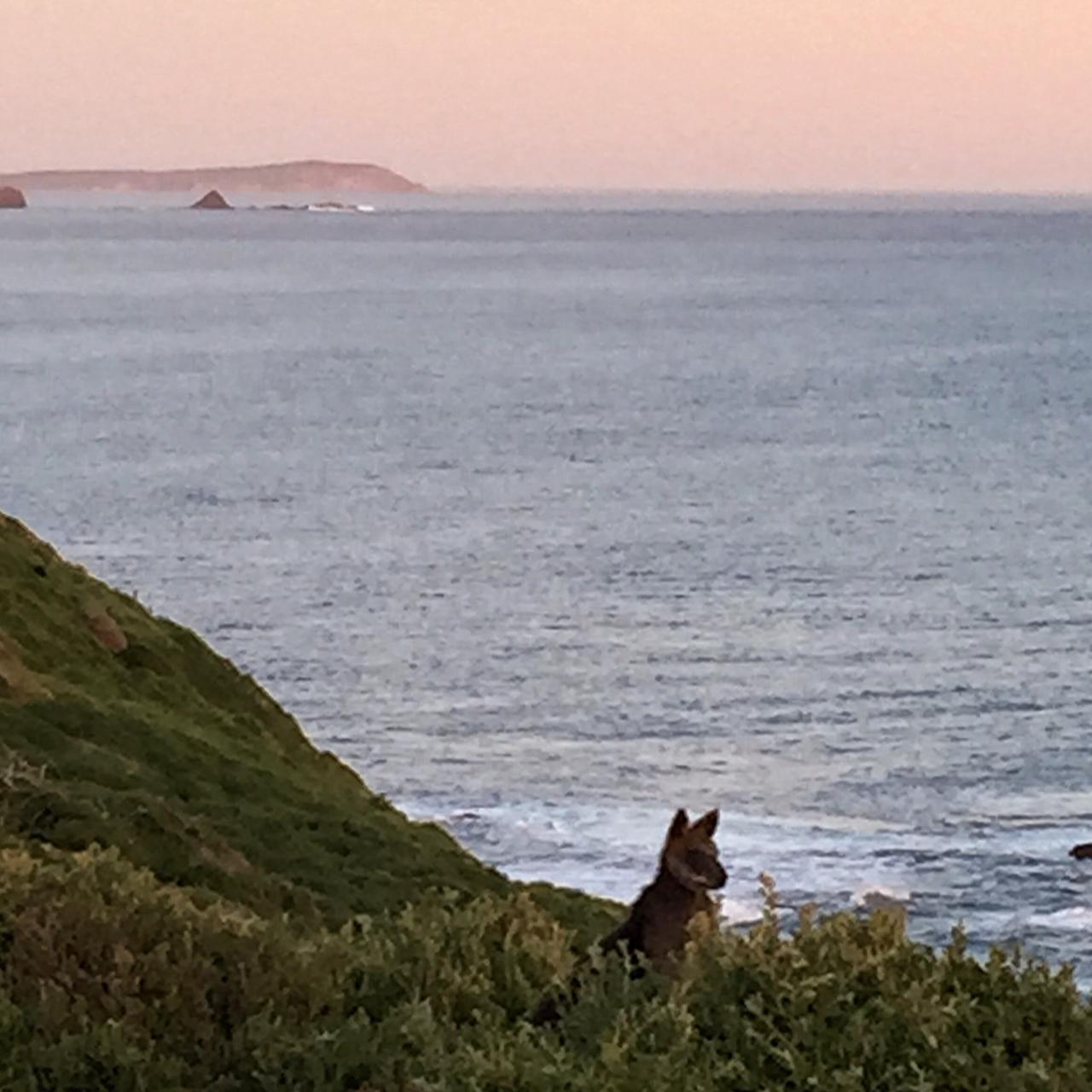 Ramble Phillip Island