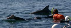 Wild Dolphin Swim Gift Card