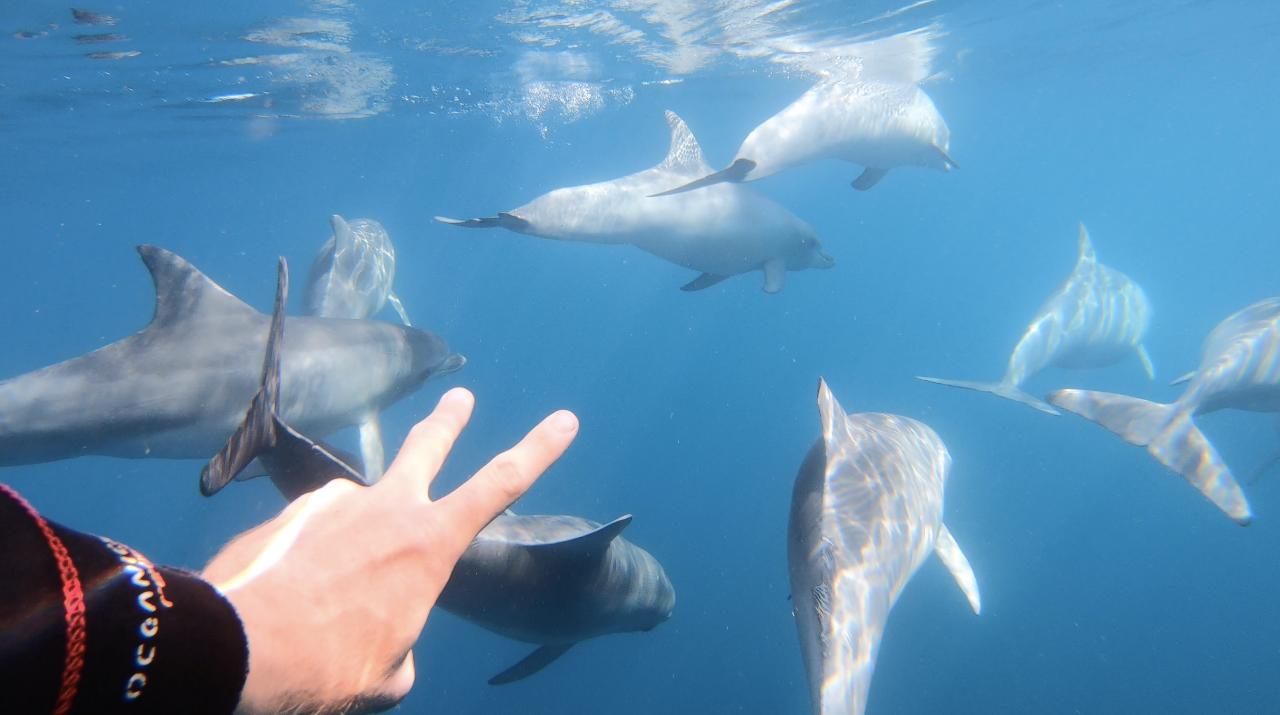 Wild Dolphin Swim