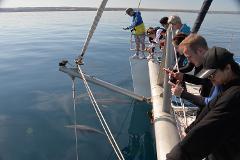 Wild Dolphin Watch