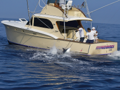 $549 ~ 1/2 Day Web Special - 4 Hours  (1:00PM) | One Price Books the Boat - Max 6 PPL