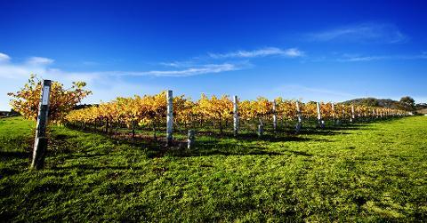 Tamborine Winery Tour