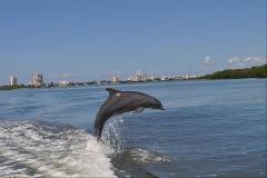3 hr Marine Life Private Charter (6 or less pax)