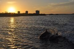 Dolphin and Shelling cruise at Sunset Fort Myers Beach