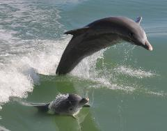 Afternoon Dolphin and Wildlife Cruise Fort Myers Beach Tour