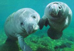 Manatee Guides Eco-Kayak Tour - Tour in Estero Bay - Mar 1 - Nov 30. Map sent to your e-mail