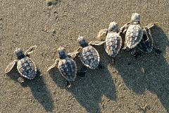 Sea Turtle / Kayaking Adventure