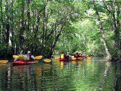 Wild Bird & Garden Birding/Kayaking Adventure / Half Day