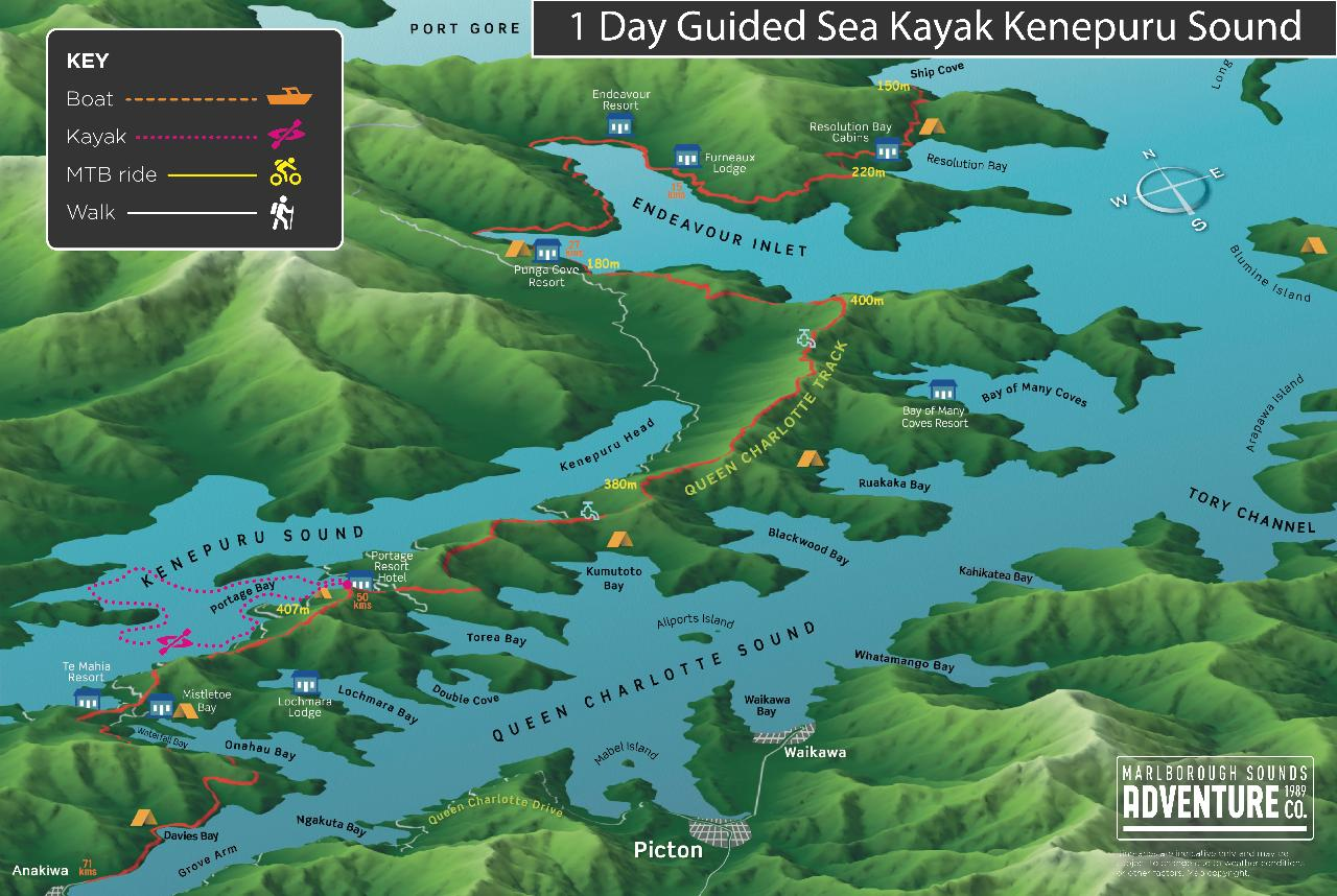 1 Day Guided Sea Kayak - Kenepuru Sound