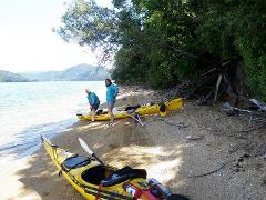 Half Day Guided Sea Kayak - Queen Charlotte Sound