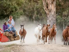 Melbourne Cup Weekend at Spring Spur -  All inclusive stay and ride package