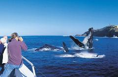 Whale Watching in Tangalooma