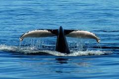 Port Stephens Whale Watch Day Tour - Small Group