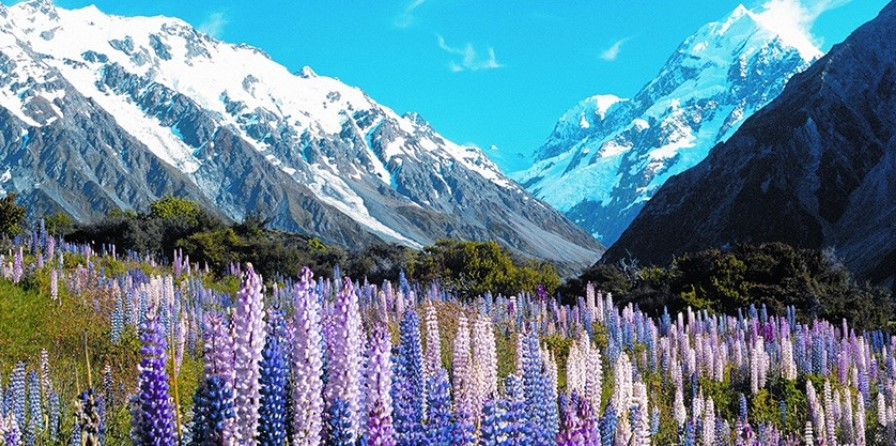 High Country - South Island - 4 Days