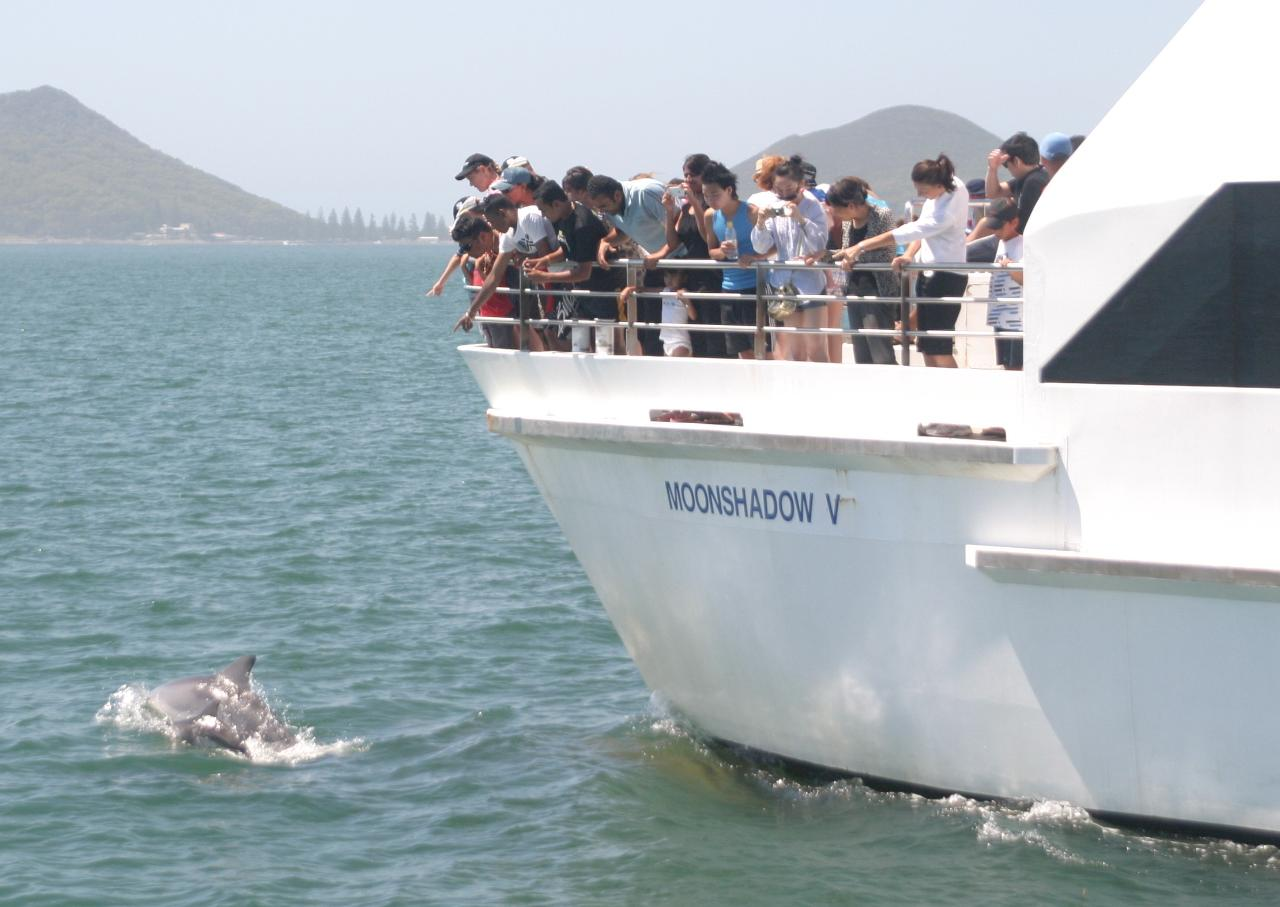 Port Stephens Dolphin Watch -  Small Group