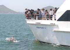 Port Stephens Dolphin Watch (Optional upgrade to 4WD & Sand Boarding or Camel Riding)