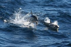 Port Stephens Day Tour with Dolphin Watch  - Luxury