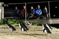 Penguin Parade Exclusive