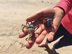 Crab Catching Tour from Gold Coast