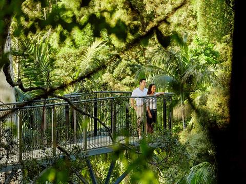 Rainforest & Skywalk Ex Brisbane & Gold Coast