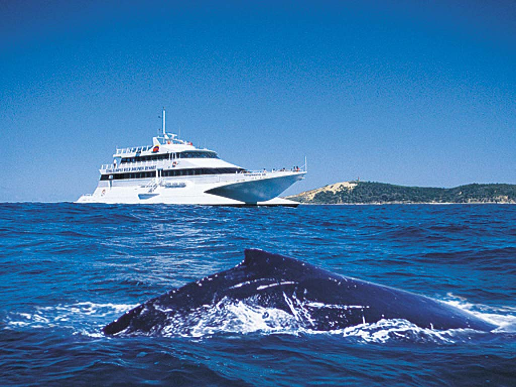 Whale Watching Tour from Brisbane