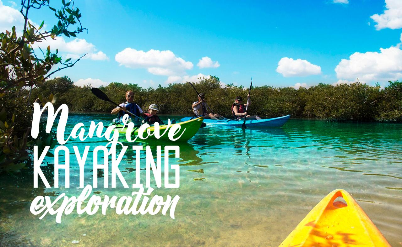 Mangrove Kayaking Exploration