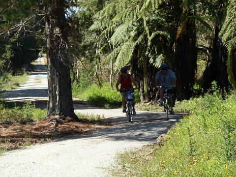 Easy Peasy   14 kms  Kaikohe to Okaihau