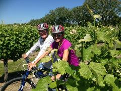 Deluxe Half Day Biking Wine Tour