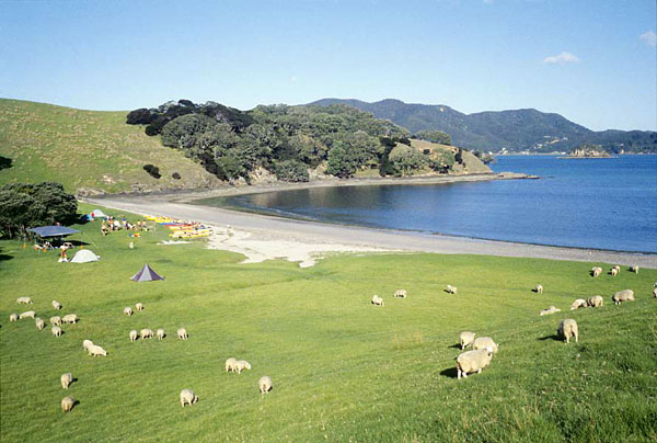 Bay Of Islands Classic 2 Day