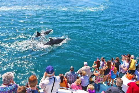 Whale Watching & Dolphin Cruise
