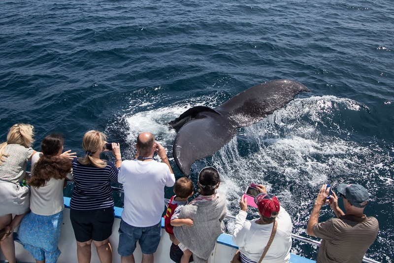 $14 Whale Watching Cruise & Ferris Wheel Ticket Package