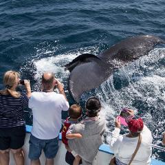 $13.00 Whale & Dolphin Cruise - Newport Beach
