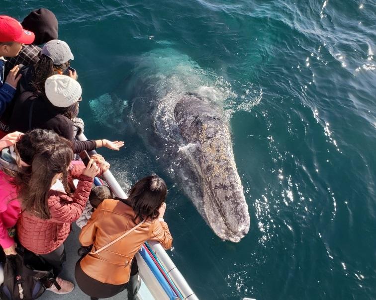 $13.00 Newport Beach Whale Watching & Dolphin Cruise