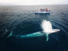 Ocean Quest's Whale Watching & Museum Package